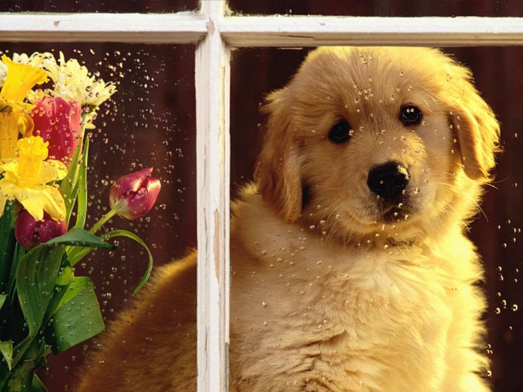 Cucciolo alla finestra (1024x768 - 131 KB)