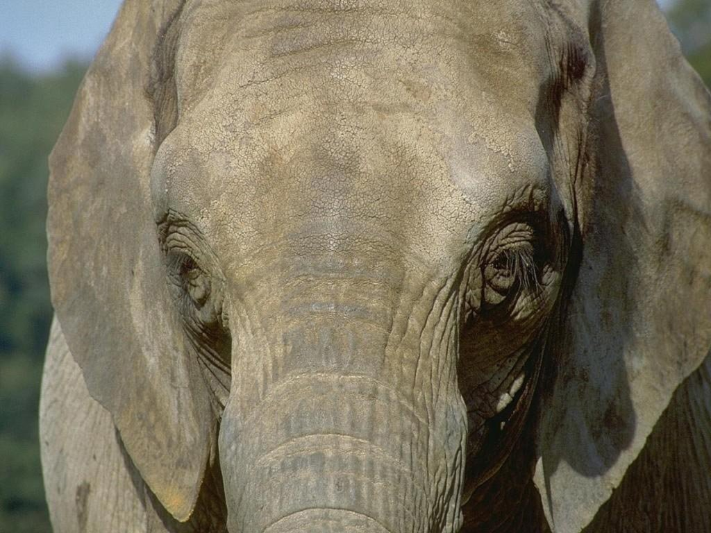 Elefante (1024x768 - 158 KB)