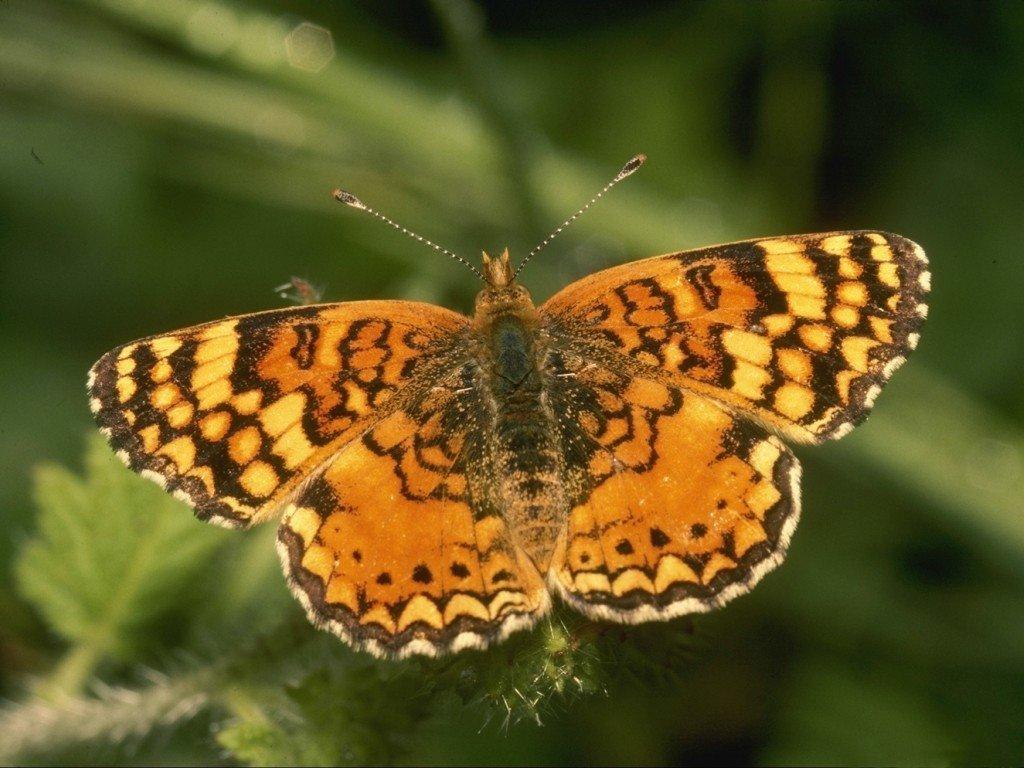Farfalla (1024x768 - 137 KB)