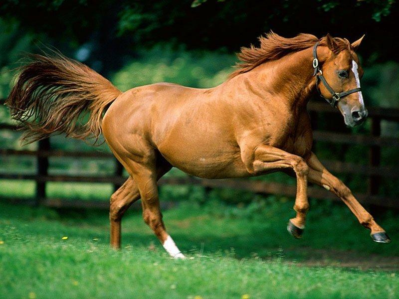 Cavallo (800x600 - 90 KB)