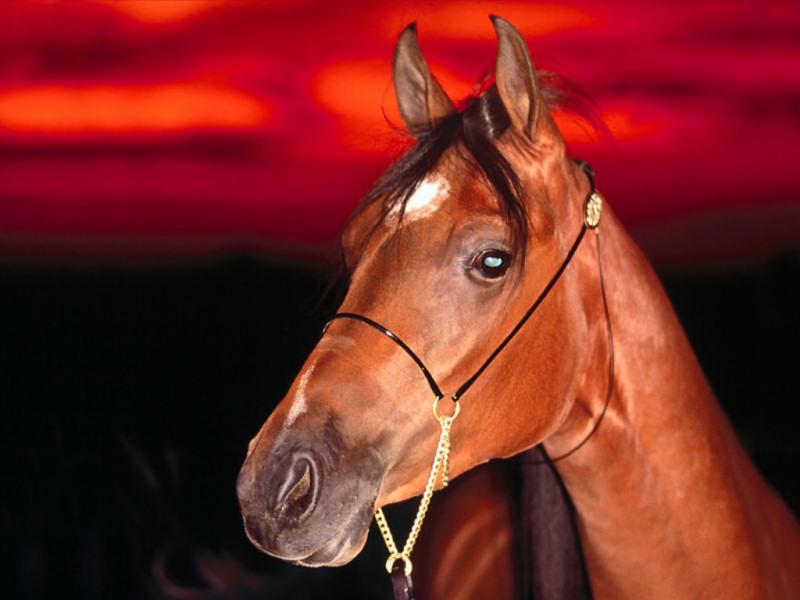 Cavallo (800x600 - 101 KB)