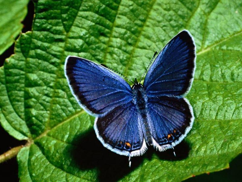 Farfalla (800x600 - 185 KB)