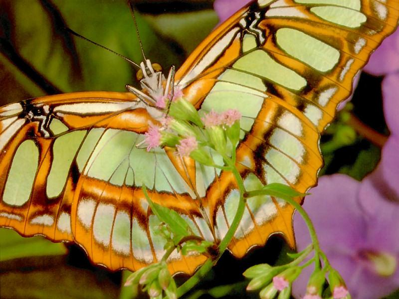 Farfalla (800x600 - 181 KB)