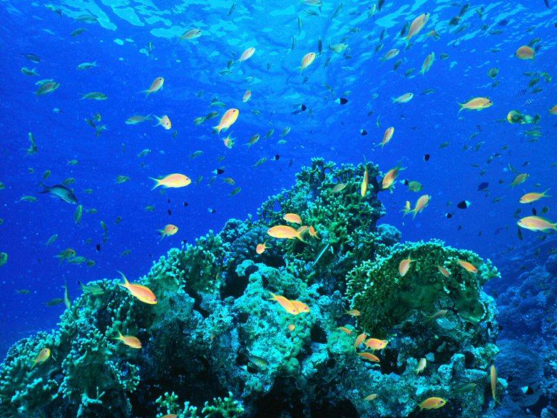 Pin animati natura pesci subacquea acquario screensaver for Sfondi animati pesci