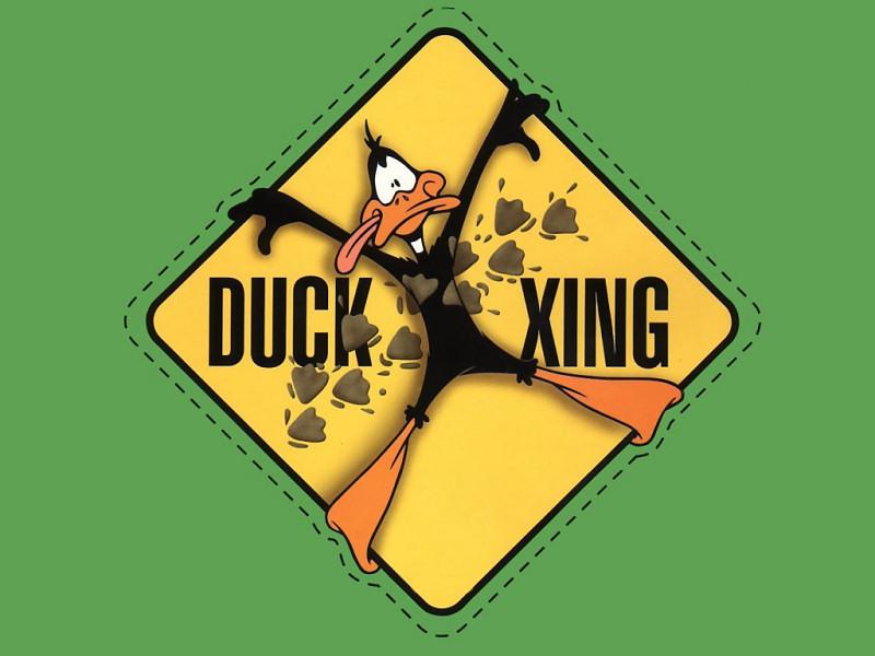 Duffy Duck (800x600 - 94 KB)