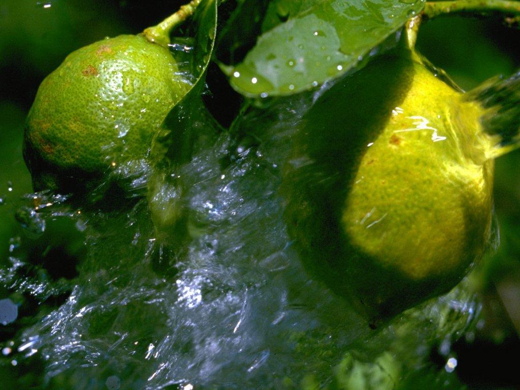 Limoni (1024x768 - 134 KB)