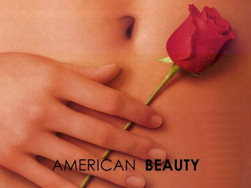 American Beauty (800x600 - 66 KB)
