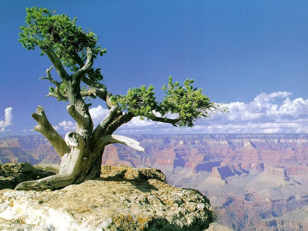 Grand Canyon (1024x768 - 225 KB)