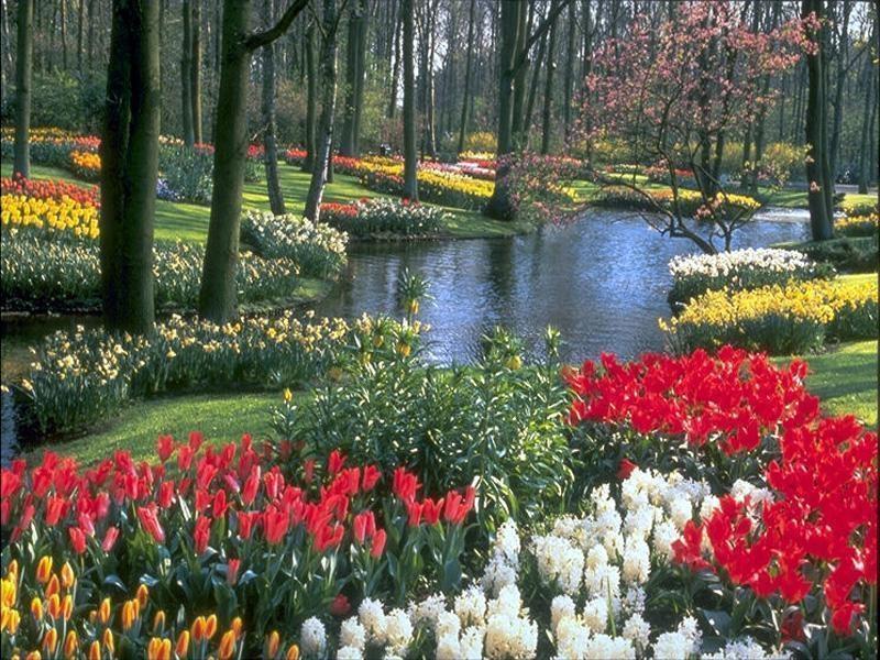 Giardino fiorito (800x600 - 329 KB)