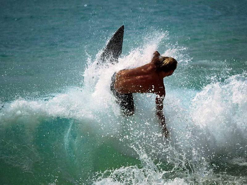 Surf (800x600 - 121 KB)